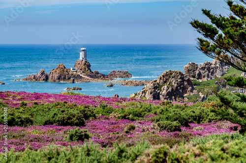 Fotografie, Obraz Coastal walk through heather meadows Corbiere Lighthouse Jersey, Channel Islands