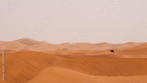 Photo  Wüste Sahara mit einsamen Kamel - Dromedar