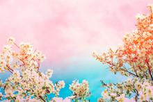 Floral Frame From Blooming Almond Plum Cherry Tree Blossom. Branches With Small Flowers Green Leaves On Toned Turquoise Pink Gradient Sky. Easter Mothers Day Wedding Greeting Card Poster Banner