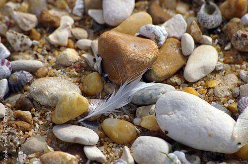 Une plume parmi les pierres Canvas Print