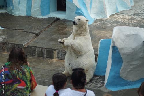 Tuinposter Ijsbeer zoo