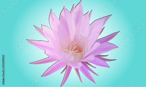 Photo  fiore Echinopsis oxygona Echinopsismultiplex