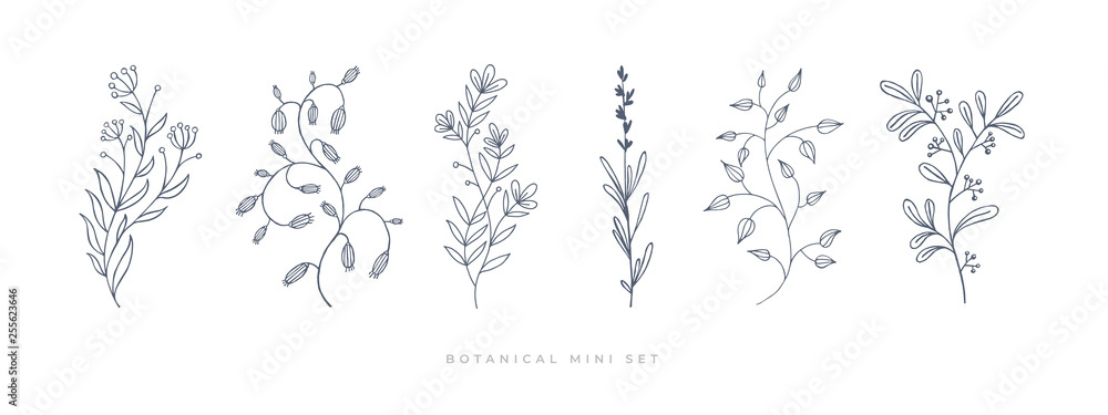 Fototapeta Set hand drawn curly grass and flowers on white isolated background. Botanical illustration. Decorative floral picture.