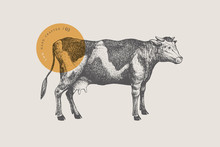 Retro Graphic Hand-drawn Cow. Engraving With Farm Animal For Menu Restaurants, For Packaging In Markets And Shops. Vector Vintage Illustrations.