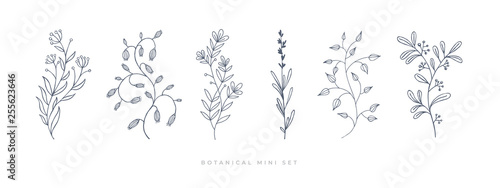 Set hand drawn curly grass and flowers on white isolated background. Botanical illustration. Decorative floral picture. #255623646