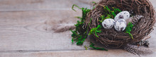 Birds Eggs In Nest On Rustic Wooden Background, Easter Concept Postcard, Banner