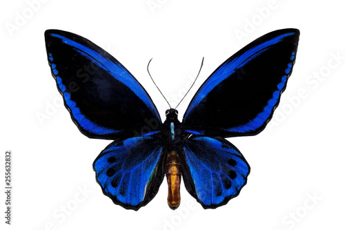 Photo sur Toile Papillons dans Grunge Big butterfly with blue wings, isolate on white background