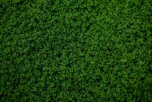 Full Frame Shot Of Ground Ivy, Textured Background