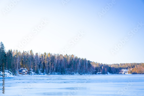 Wall Murals Blue Forest in winter morning