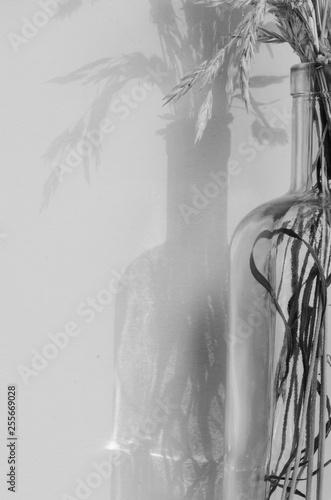 Photo  Czarno-białe zdjęcie, zoom na źdźbła trawy w szklanej butelce.