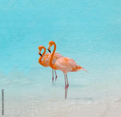 Keuken foto achterwand Flamingo Pink flamingo bird