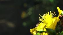 Closeup Of African Honey Bee C...