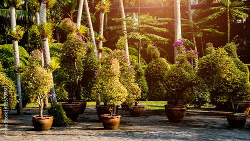Foto op Canvas Bruin Luxury landscape design of the tropical garden. Beautiful view of tropical landscape