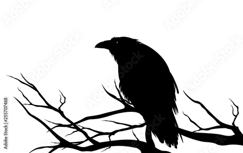 Photo ominous raven sitting on a bare tree branch - black crow bird halloween theme ve