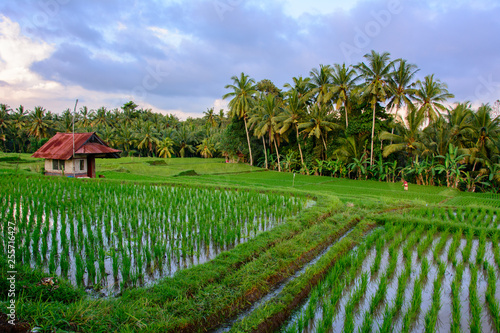 Foto auf Gartenposter Grun House in Ubud rice field, Bali Indonesia