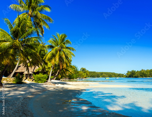 View of the sandy beach, Moorea island, French Polynesia Canvas Print