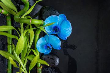 Piękny skład spa: niebieskie kwiaty orchidei i zielone łodygi bambusa na mokre czarne kamienie do masażu i tło łupków