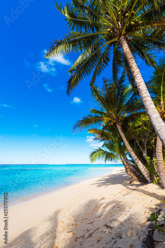 La pose en embrasure Palmier View of the sandy beach, Cook Islands, South Pacific. Copy space for text. Vertical.