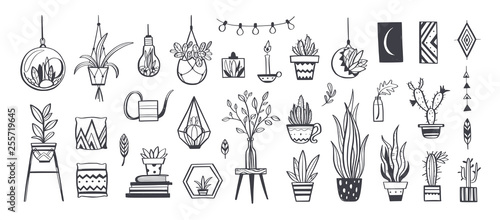 Photo Home decor and House plants vector hand drawn set