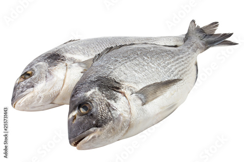 Fotografie, Obraz  dorado fish, clipping path, isolated on white background, full depth of field