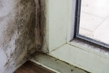 Spot Of Mold, Mould, Mildew Or Fungas On At Corner Of White Wall Above Beside Frame Of Door..