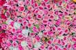 Leinwandbild Motiv Colorful flower backdrop for wedding and love