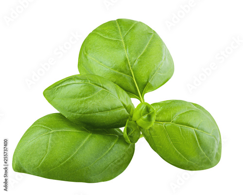 Carta da parati basil, isolated on white background, clipping path, full depth of field