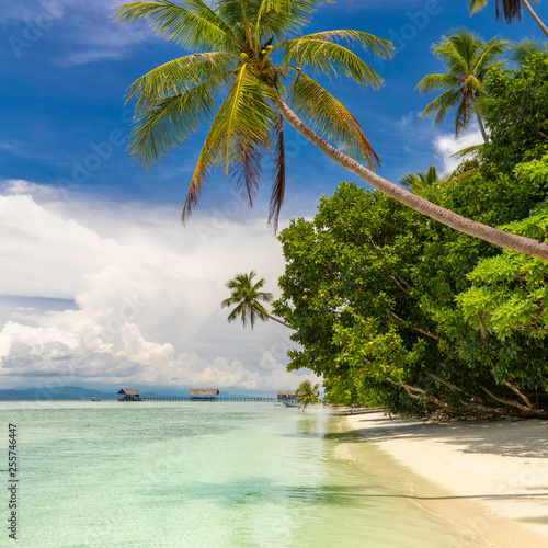 Tropical beach. Nobody. View of paradise tropical beach with coconut palms