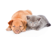 Sad Mixed Breed Puppy And Kitten Lying Together. Isolated On White Background