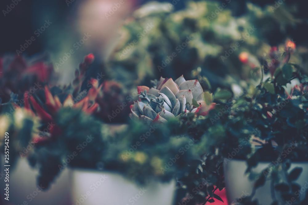 Fototapety, obrazy: Succulent plants. vintage style