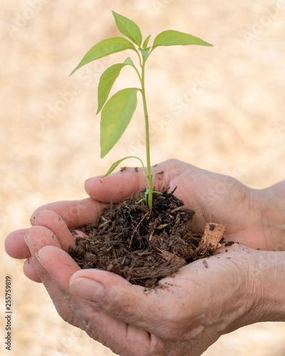 Slika na platnu World environment day reforesting eco bio arbor CSR ESG ecosystems reforestation concept
