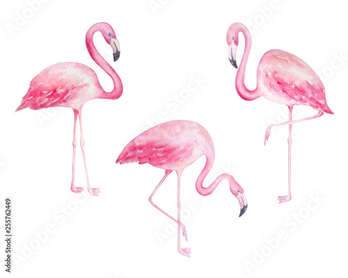 Fotobehang Flamingo vogel watercolor flamingos