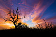 canvas print picture - Beautiful sunset and sunrise savannah field with silhouette vultures perching on dry tree