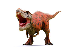 Tyrannosaurus Rex, T-rex Dinosaur From The Jurassic Period (3d Rendering Isolated With Shadow On White Background)