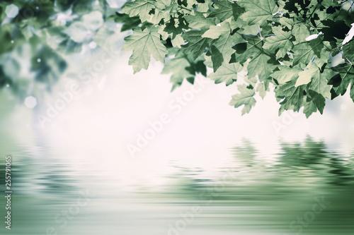 Montage in der Fensternische Olivgrun Green Background with Maple