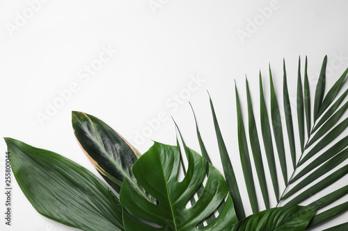 Poster Vegetal Flat lay composition with tropical leaves and space for text on white background