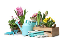 Composition With Plants And Gardening Tools On White Background