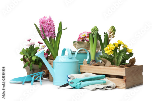 Fotografiet Composition with plants and gardening tools on white background