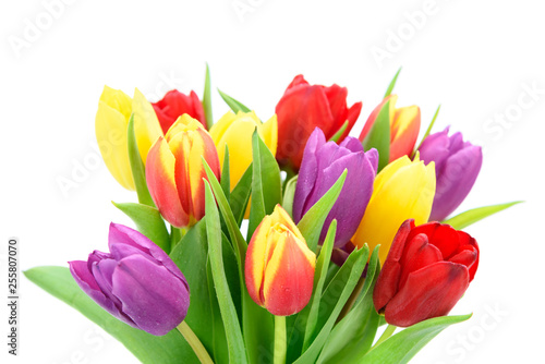Fototapety, obrazy: Bouquet of fresh multi colored tulips flowers isolated on a white background in close-up