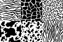 Animal Skin Pattern. Wildlife Zebra Texture, Tiger Skin Stripes And Leopard Spots. Animals Textures Seamless Patterns Vector Set