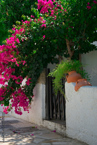 Bougainvillaea blooming bush with white and pink flowers on a stone white fence Fotobehang