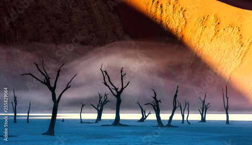 Foto auf Leinwand Lavendel Dead acacia trees on the background of sand dunes and stripes of morning fog. A very rare natural phenomenon for these places. Stunning light, color and shape. Africa. Landscapes of Namibia. Sossusvle