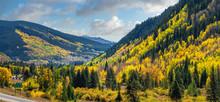 Brilliant Golden Autumn Aspen Trees In Vail Colorado