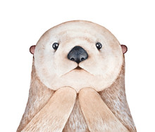 Cute Fluffy Little Sea Otter (Enhydra Lutris) Character. Looking At Camera, Astonished Facial Expression. Symbol Of Playfulness And Family. Handdrawn Water Color Graphic Illustration, Cutout Element.