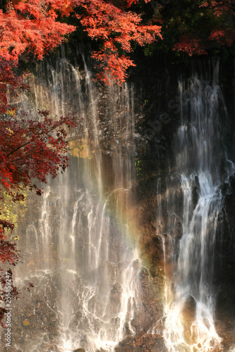 Fototapety, obrazy: 静岡_白糸の滝
