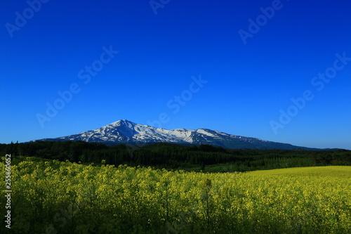 Photo sur Toile Bleu fonce 鳥海山と菜の花