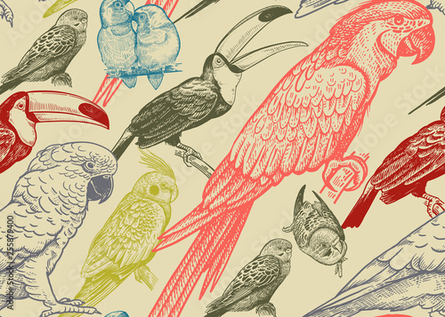 Cotton fabric Parrots and toucans. Tropical birds. Seamless vector background.