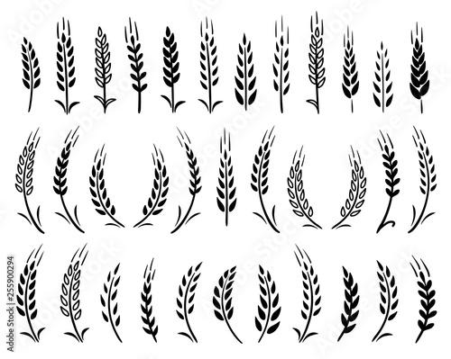 Obraz na plátne set of black hand drawn wheat ears icons