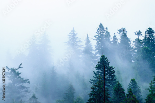 Garden Poster White Misty mountain landscape