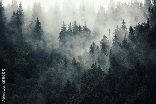 Poster Blanc Misty mountain landscape